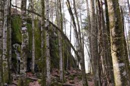 adalsborgen forest.jpg