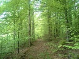 home trees