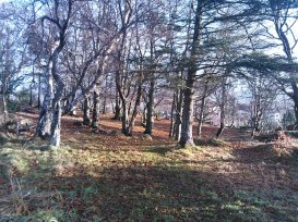 buøy trees 2