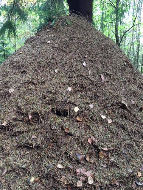 deep time walk vestfold fall 2017 ant hill