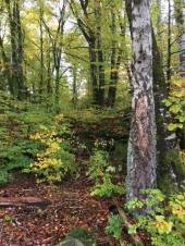 deep time walk vestfold fall 2017 trees green