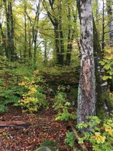 deep time walk vestfold fall 2017 trees green
