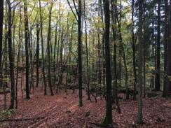 deep time walk vestfold fall 2017 trees