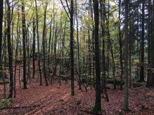 deep time walk vestfold fall 2017 trees