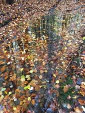 deep time walk vestfold fall 2017 water