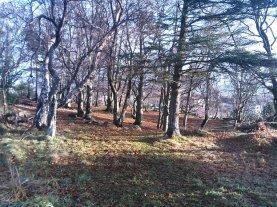 buøy trees 2.jpg